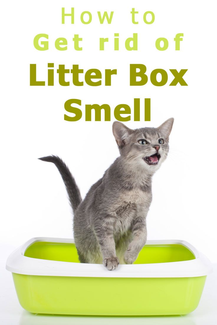 How to Get Rid of Litter Box Smell (With images) Litter