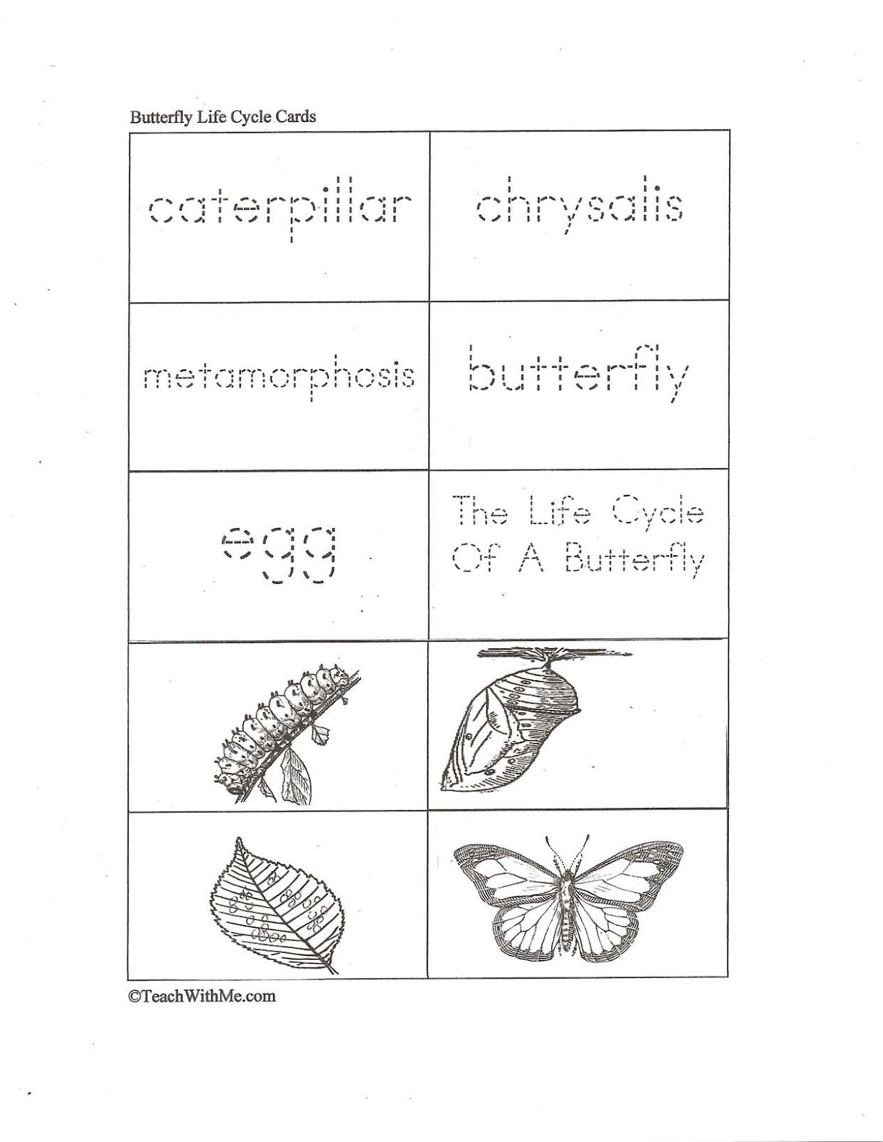 Traceable Butterfly Life Cycle Cards
