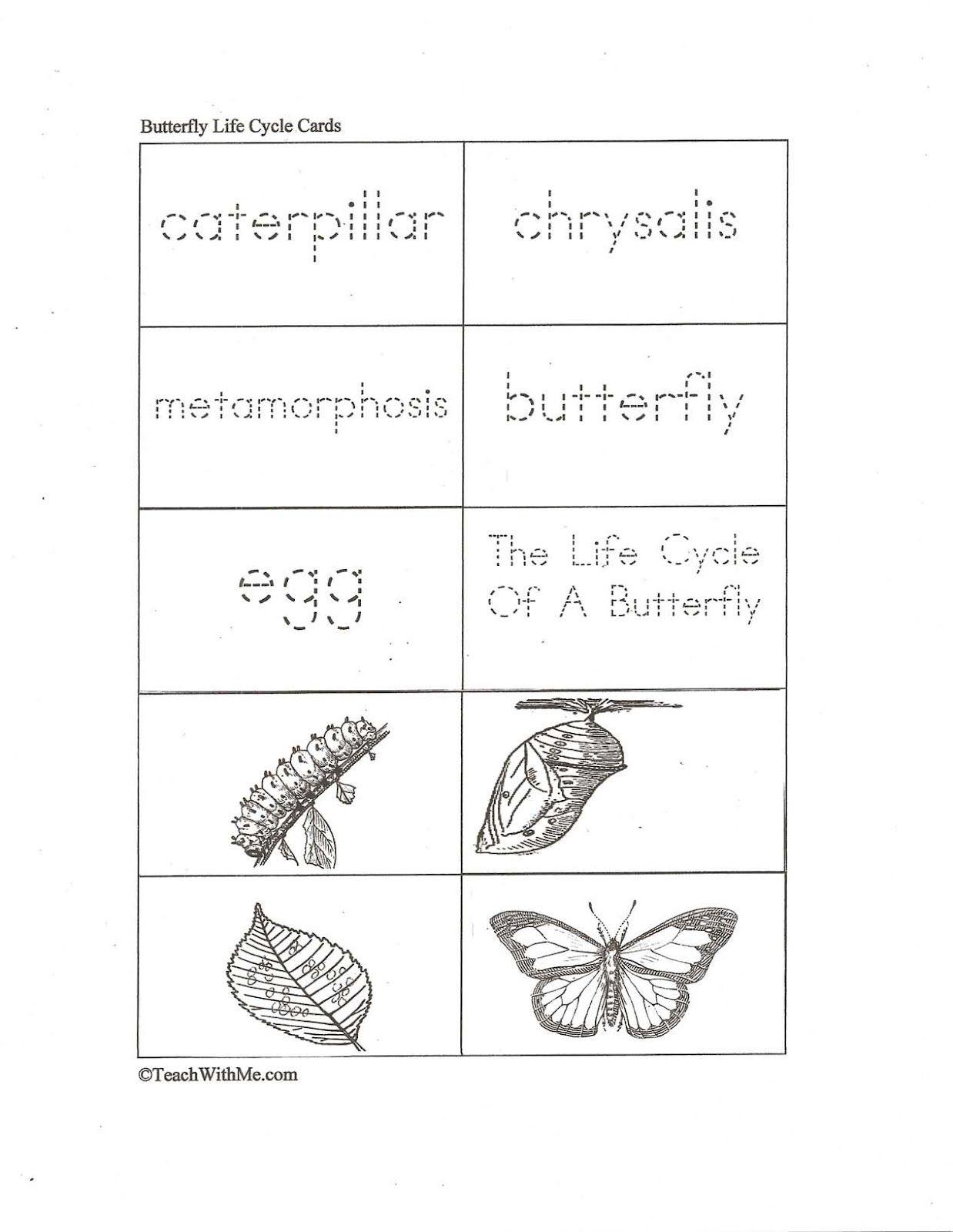 worksheet Life Cycle Of Butterfly Worksheet traceable butterfly life cycle cards cards