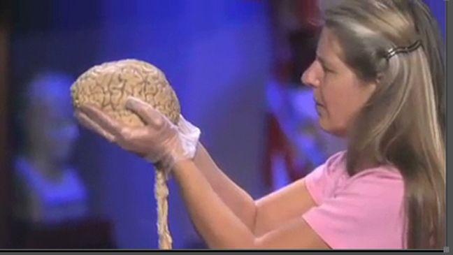 brains trust most viewed ted talks videos news com au ted