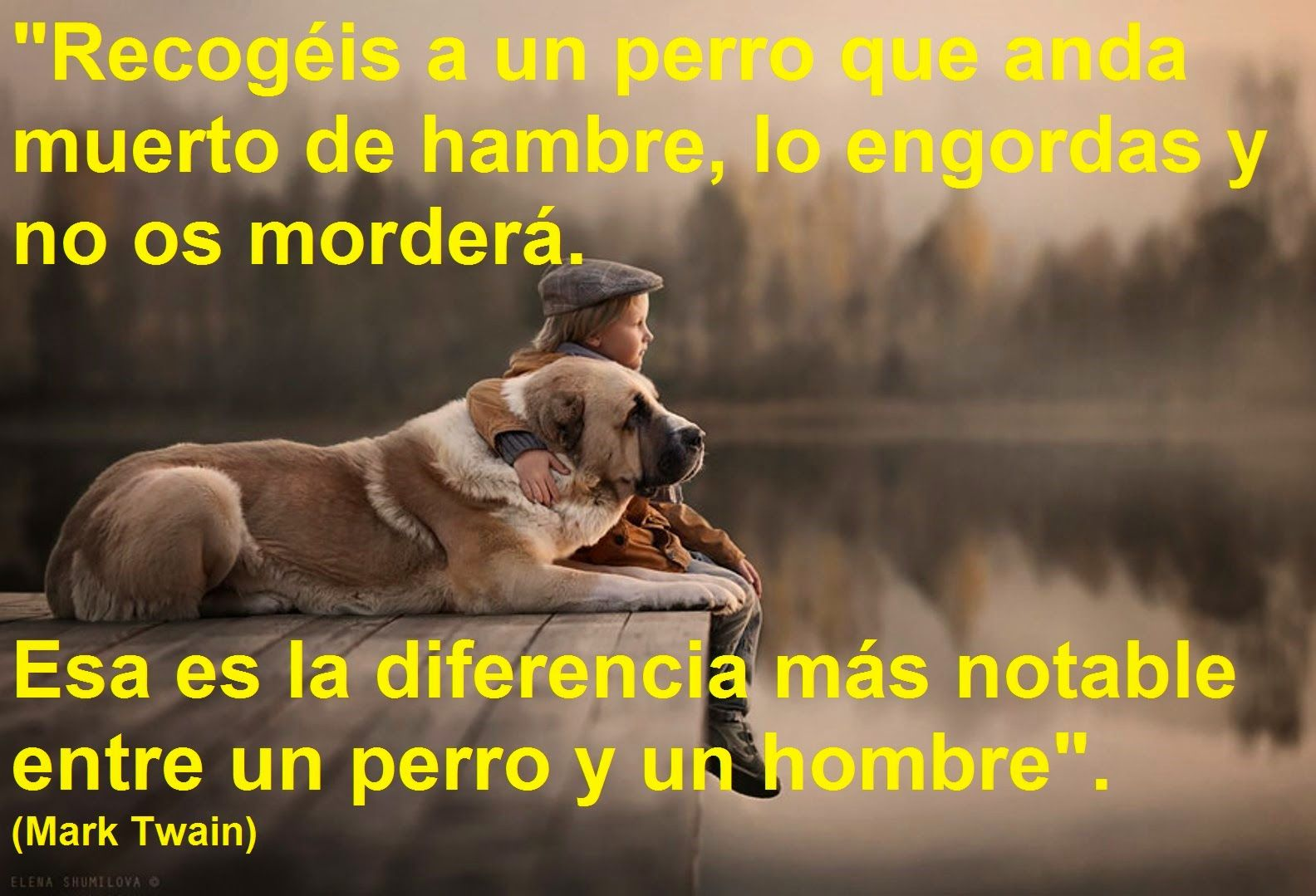 Imagenes De Perros Muertos Con Frases Www Miifotos Com