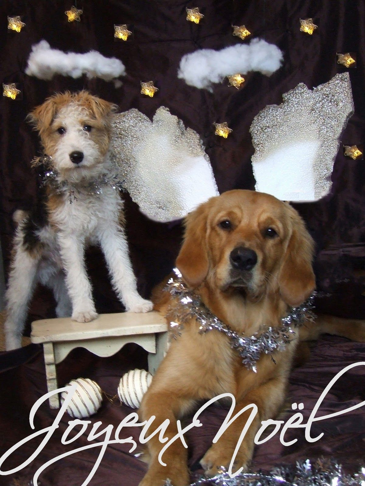 My Special Christmas Greetings To You Sharon Santoni Nol