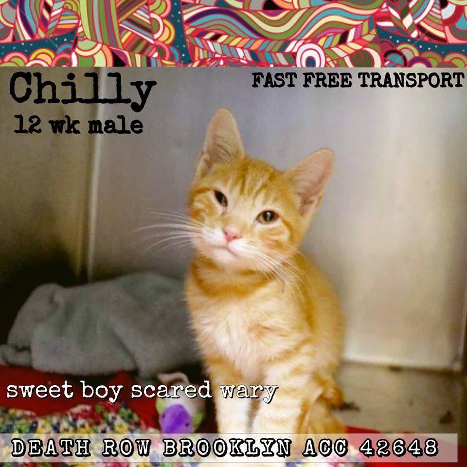 Catsrangels2 On Twitter Tabby Cat Tabby Kitten Tabby Cat Pictures