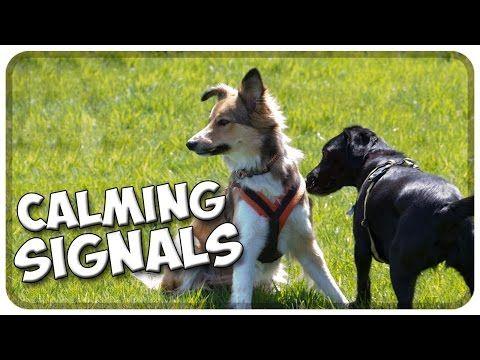 Calming Signals BeschwichtigungsSignale vom Hund