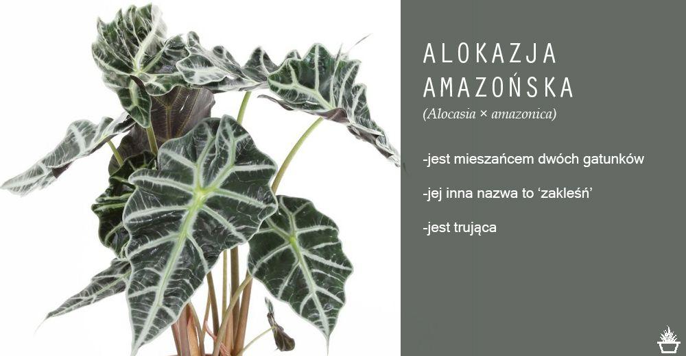 Rosliny Jednoroczne I Dwuletnie Do Ogrodu Plants