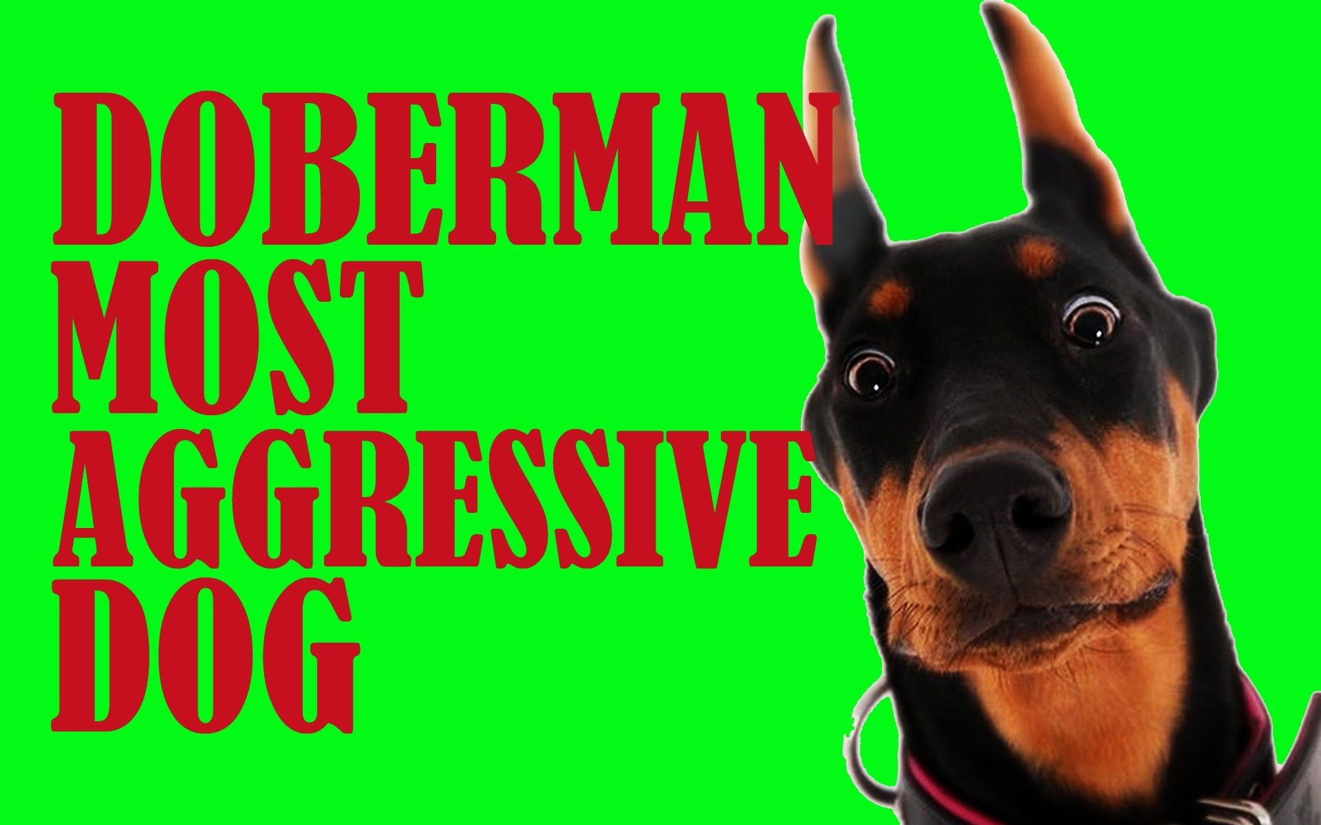 Watch The Funniest Videos On Youtube Doberman Most Aggressive