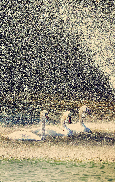 When It Rains It Swans >> Lluvia Y Sombrillas Rain And Umbrellas Love Rain