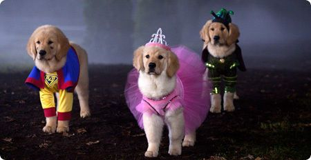 Spooky Buddies Gallery With Images Spooky Buddies I Love Dogs