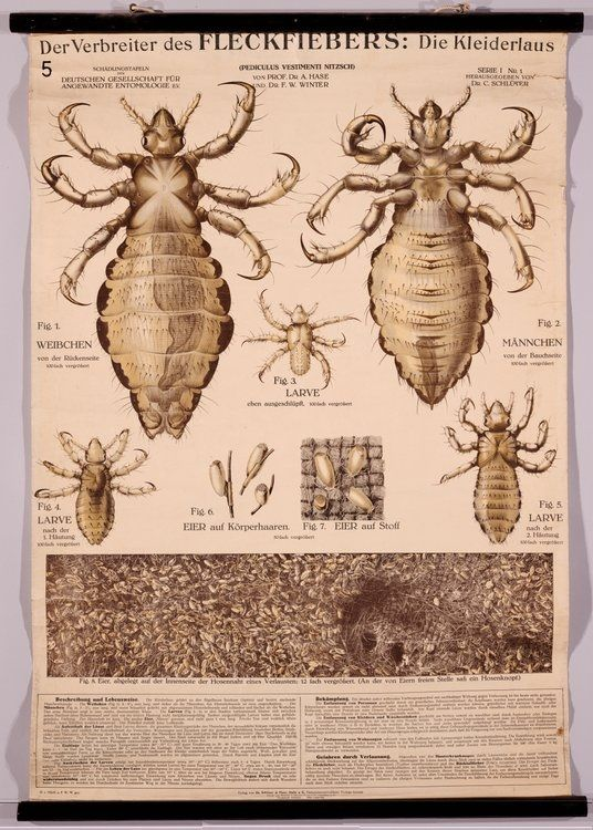 Historic Entomology Online Insects Pinterest Insects