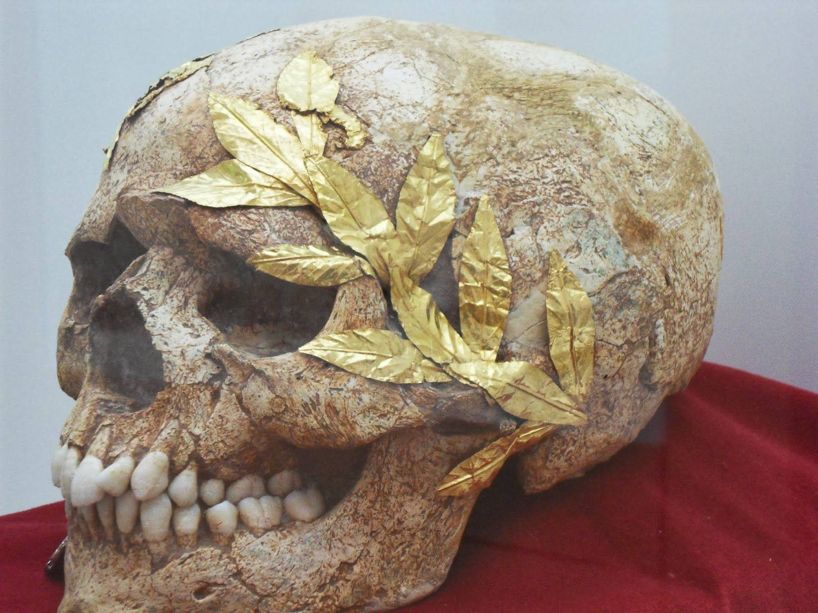 The Mysterious Skull With The Golden Wreath Of Protection