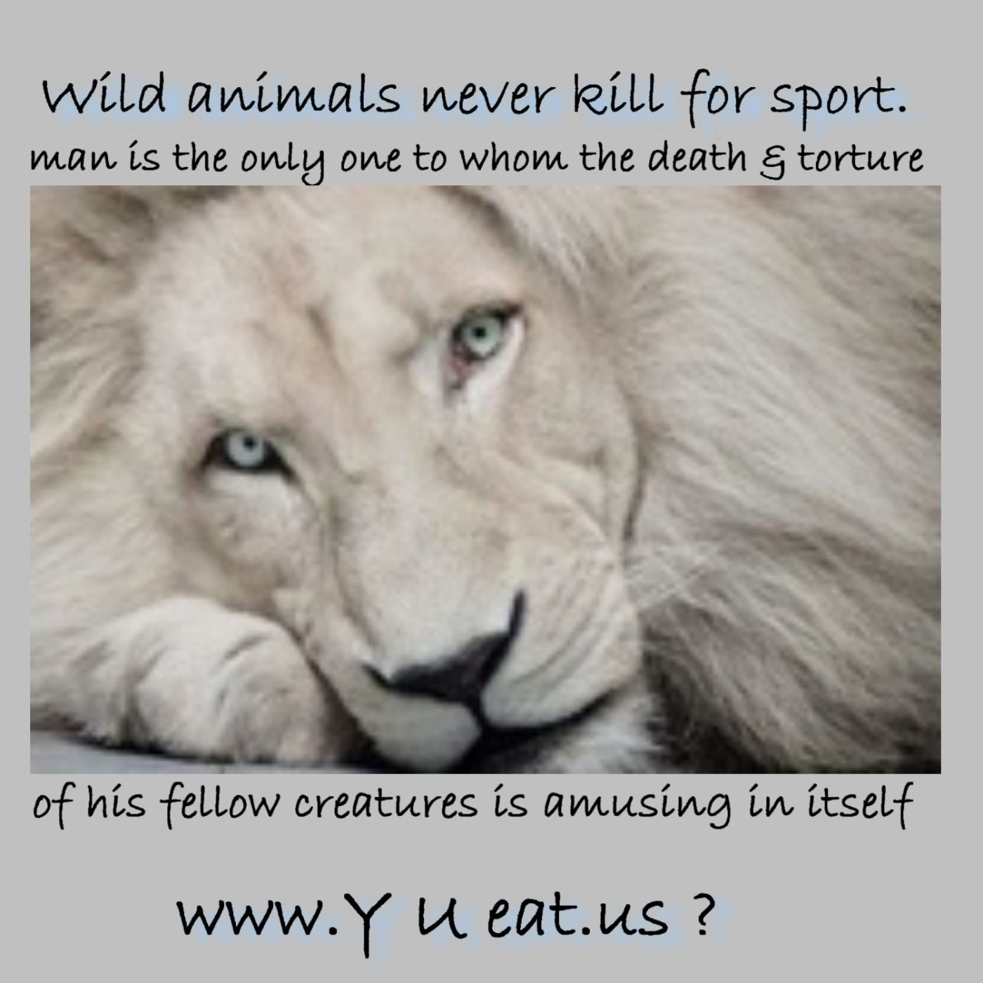 That Is Wrong Horrible Vegan And Wild Animals Quote