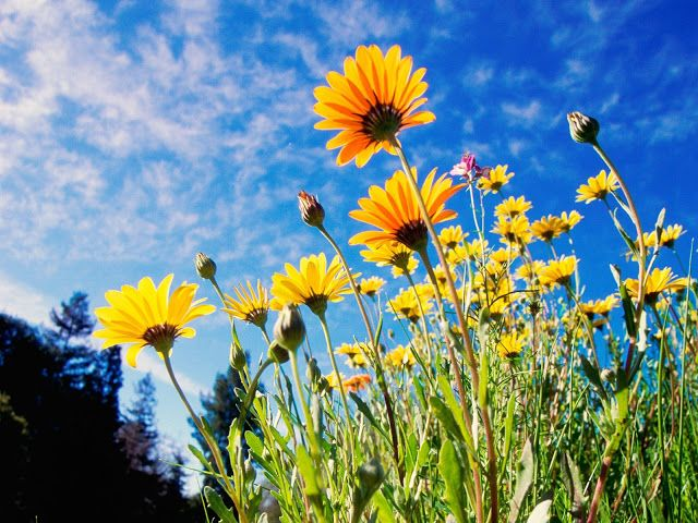 Beautiful Free Flowers Wallpapers The Most Beautiful Scenery In