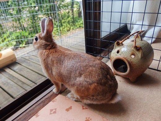 うさぎのはるちゃん日記2015 うさぎのはるさん はるちゃん 何見て跳ねる So Netブログ うさぎ 可愛すぎる動物 ウサギ
