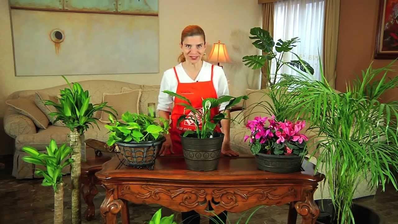 Como iniciar su negocio de cuidado de plantas de interior - Cuidado de plantas de interior ...