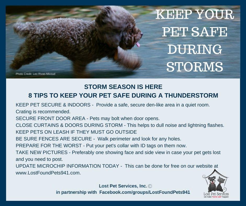 8 Tips To Keep Pets Safe During Thunder Lighting Storms Losing A Pet Pet Safe Service Animal