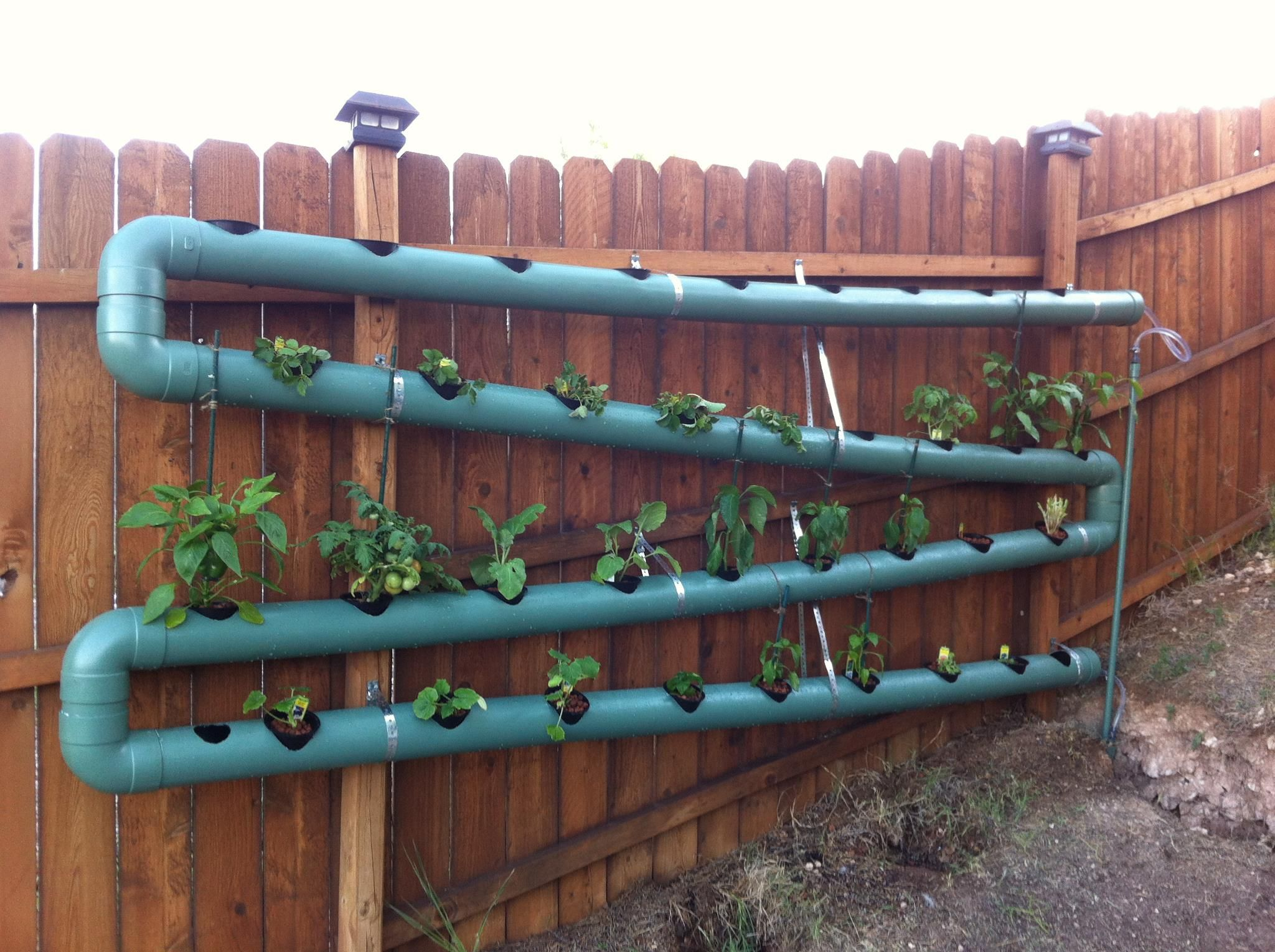 my diy aquaponics system so far so good 40ft of pvc and 36 spots