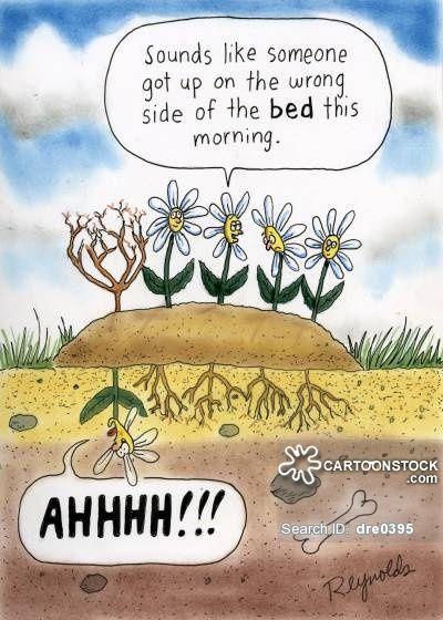 Monday Morning cartoons, Monday Morning cartoon, funny ...