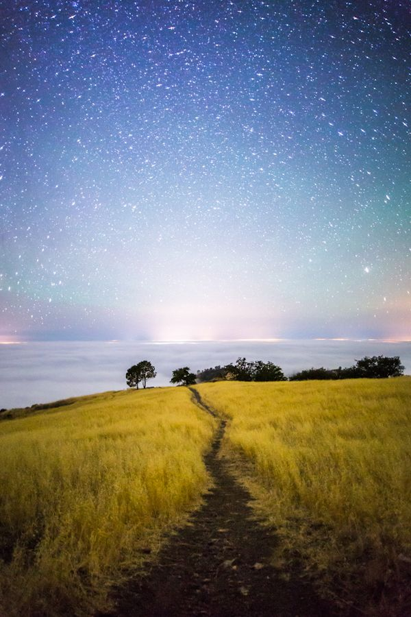 Field Of Dreams by Michael Shainblum