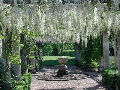 White Wisteria Walk In A Formal Garden French Pyrenees White