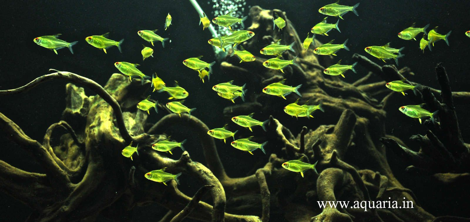 Aquarium fish tank in chennai - Planted Aquarium Fish Pictures Images Exotic Aquarium Fish Aquarium Plants