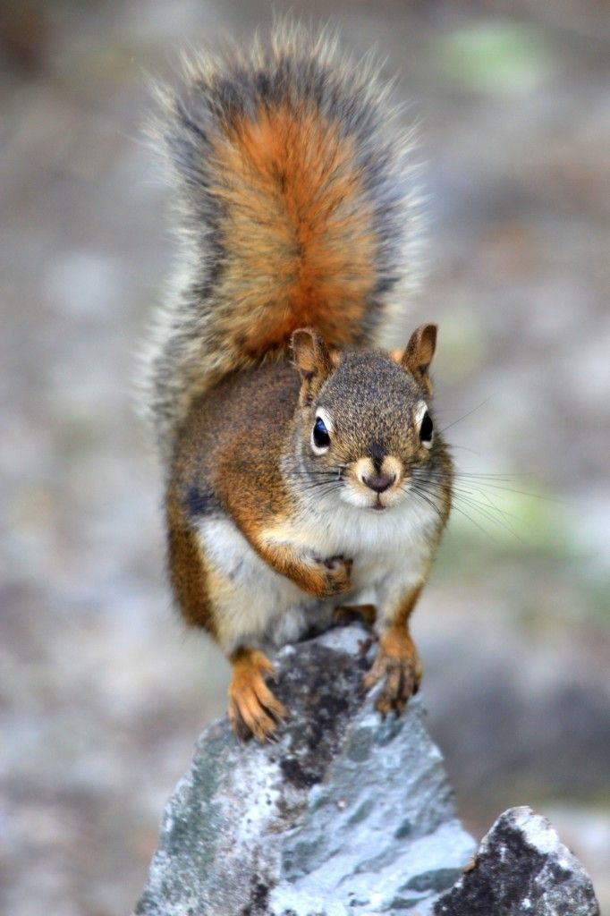 Cute Squirrels Photography