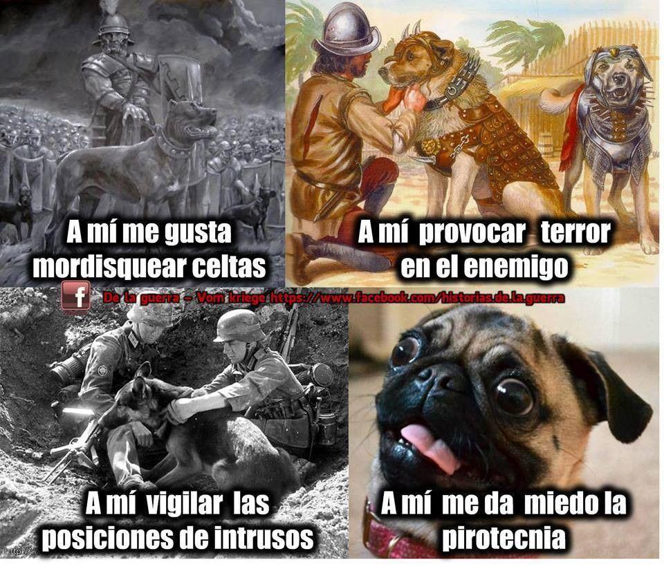 Pin De Victor Guerrero En Memes Memes De Animales Divertidos Perros Memes Graciosos