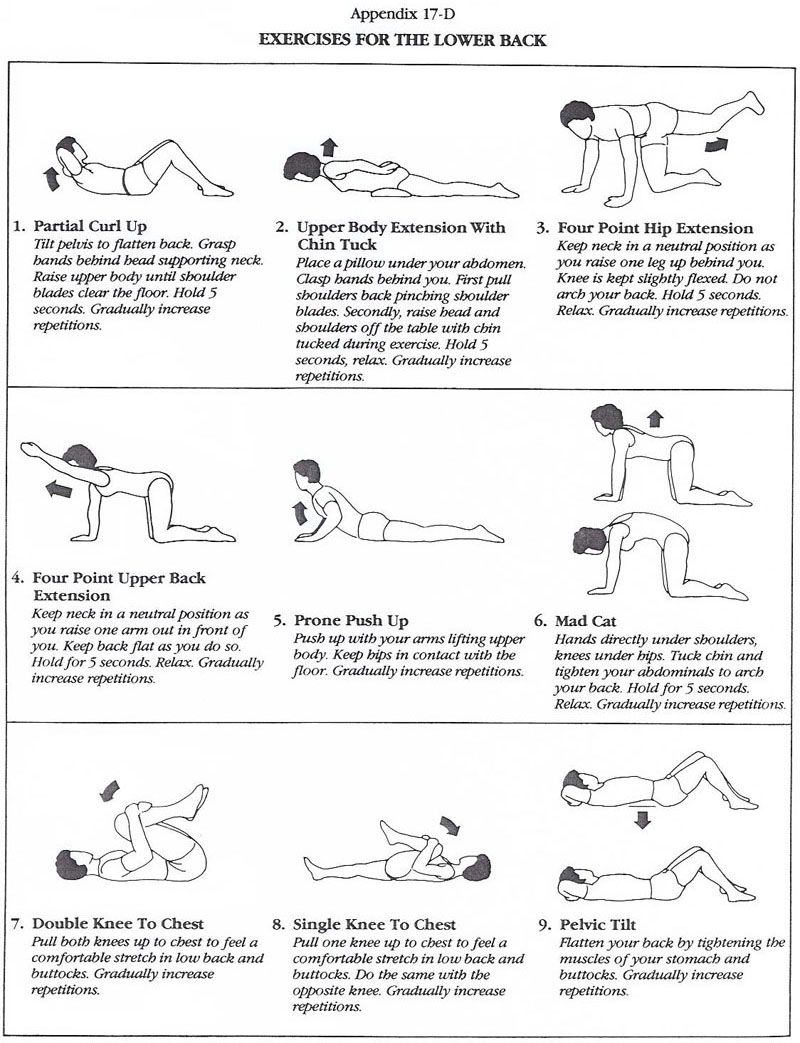 small resolution of great little diagram illustrating popular lower back exercises