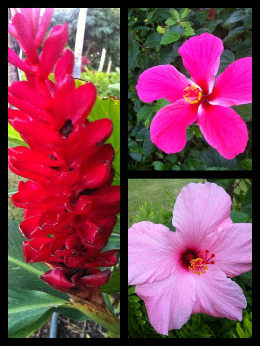 Hawaii Flowers Taken On The Big Island With My Iphone