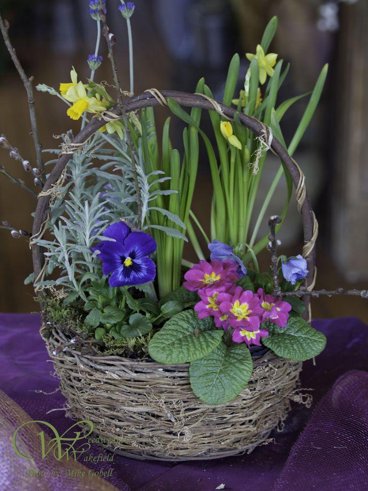 Arrangements Weedweavers Of Wakefield Easter Basketsfuneralwakefield Flower