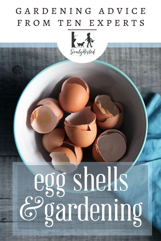 What Every Gardener Needs To Know About Egg Shells Veg Garden