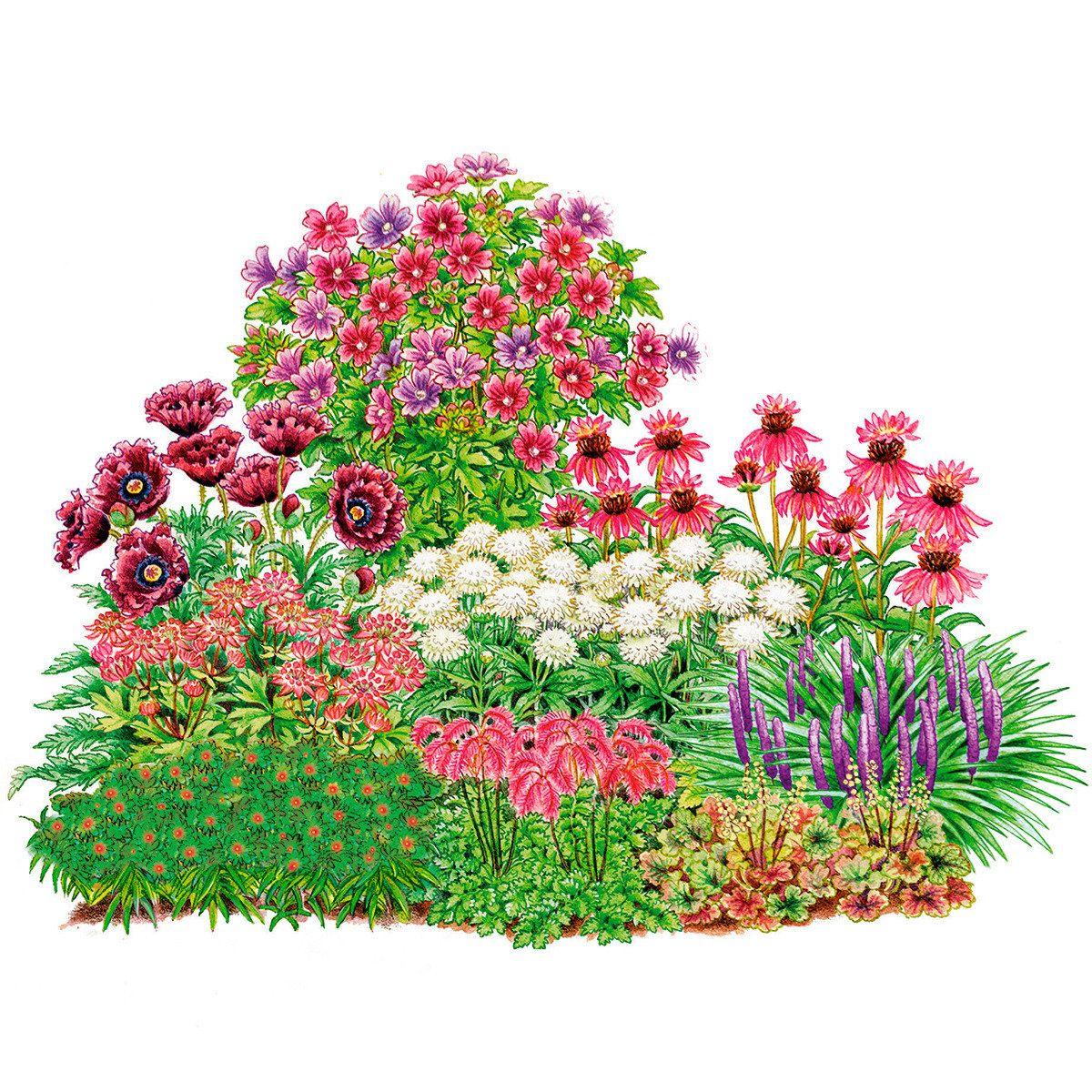 sortiment geheimnisvolle stauden artistic floral amazing pinterest garten gardens and. Black Bedroom Furniture Sets. Home Design Ideas