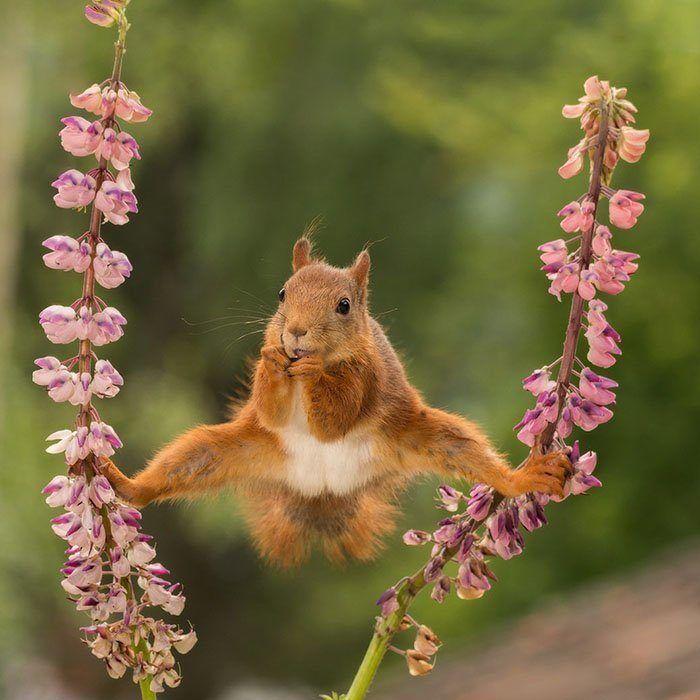 Самые смешные фотографии животных с конкурса Comedy ...
