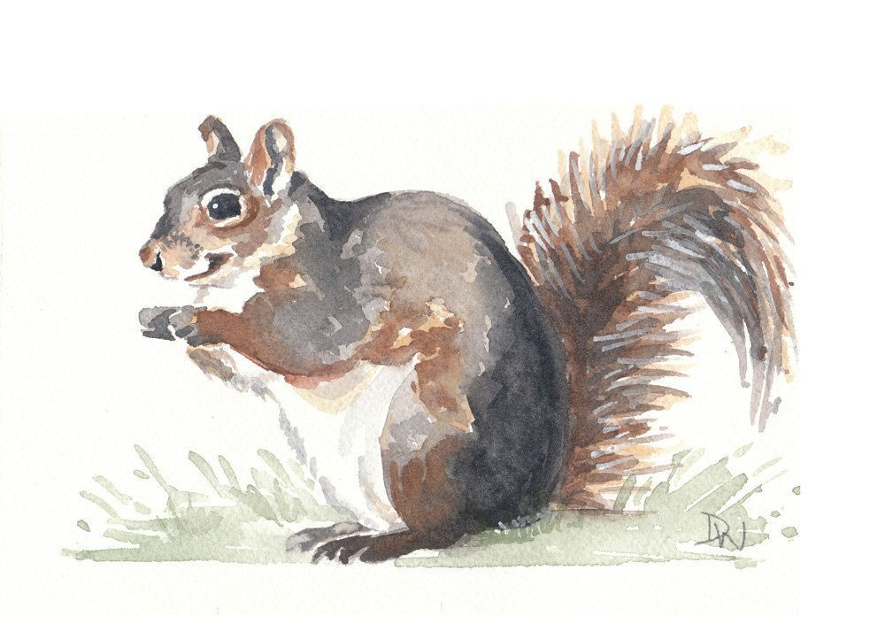 I Need An Earl For My Walls Original Squirrel Watercolor Animal Illustration Nature Art 7x5 20 00 Via Et Animal Illustration Watercolor Animals Animals