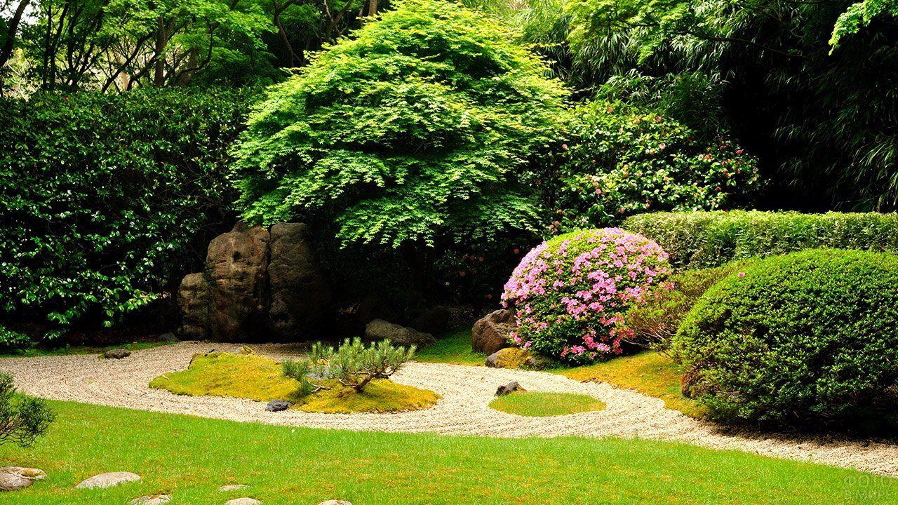 Оформление сада (47 фото) в 2020 г | Садовые растения ...