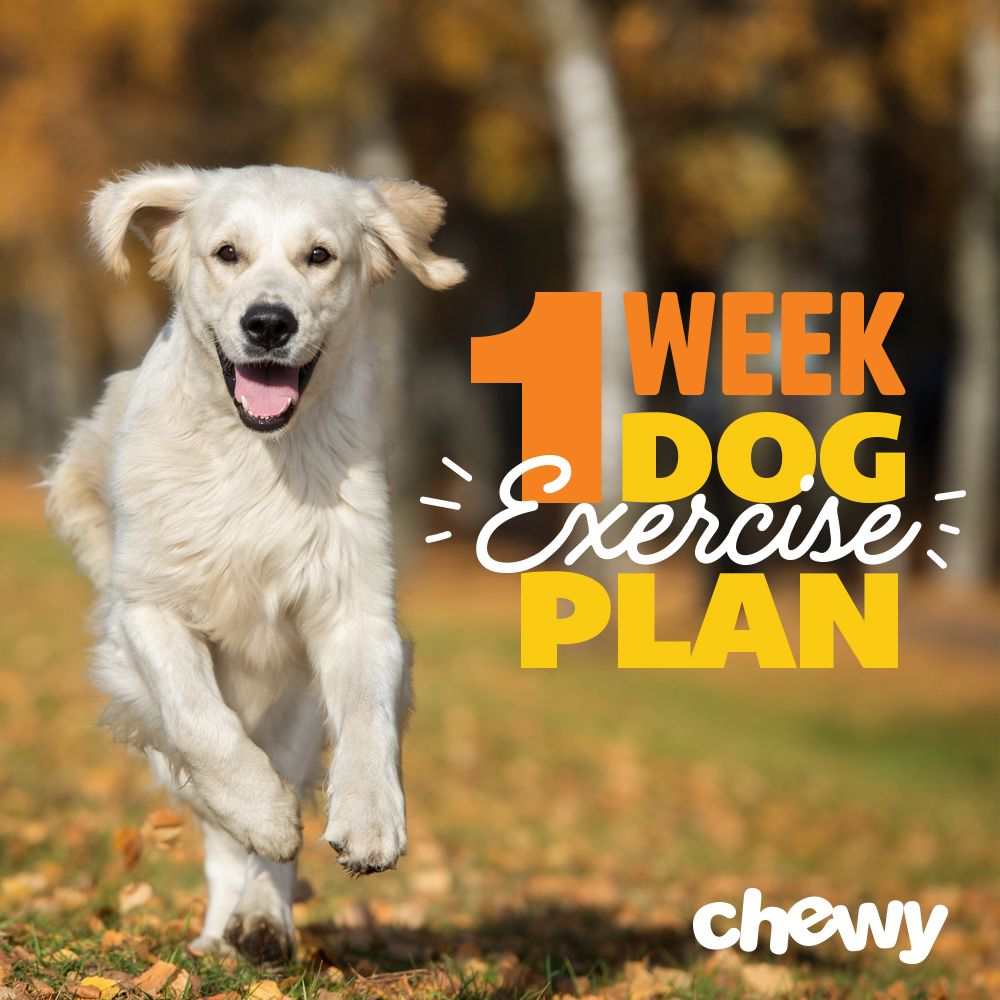 Pet Exercises One Week Workout Plan For A Lazy Dog Overweight