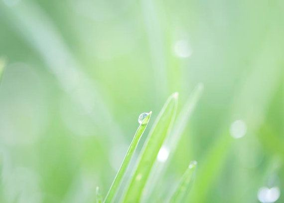 Garden PhotographyFresh Spring Green Grass Waterdrop by BreeMadden, $15.00