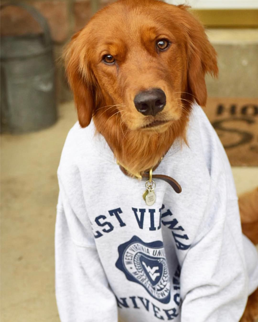 We Re Pawsitively Sure That The Mountaineers Are The Best Wvu Mountaineers Letsgomountaineers Westvirginia We Dogs West Virginia University West Virginia