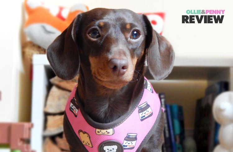 Review Dukier Reversible Fabric Dog Harnesses Dog Harness