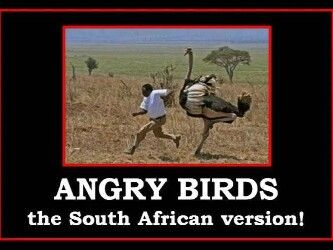Only In South Africa Funny Quotes South African Africa
