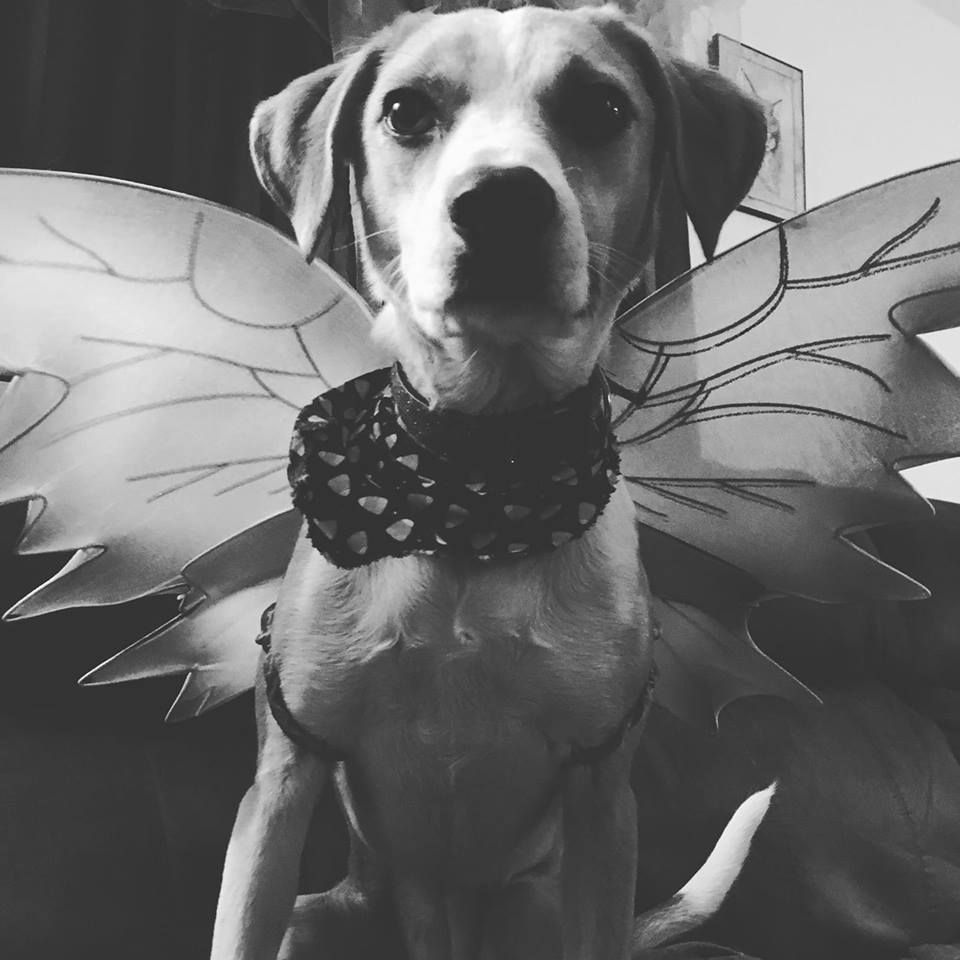 Pet Costume Contest This Saturday October 27th 2018 At Our Center