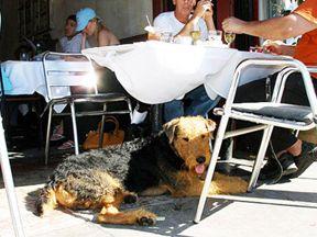 Rehoboth Dog Friendly Restaurants