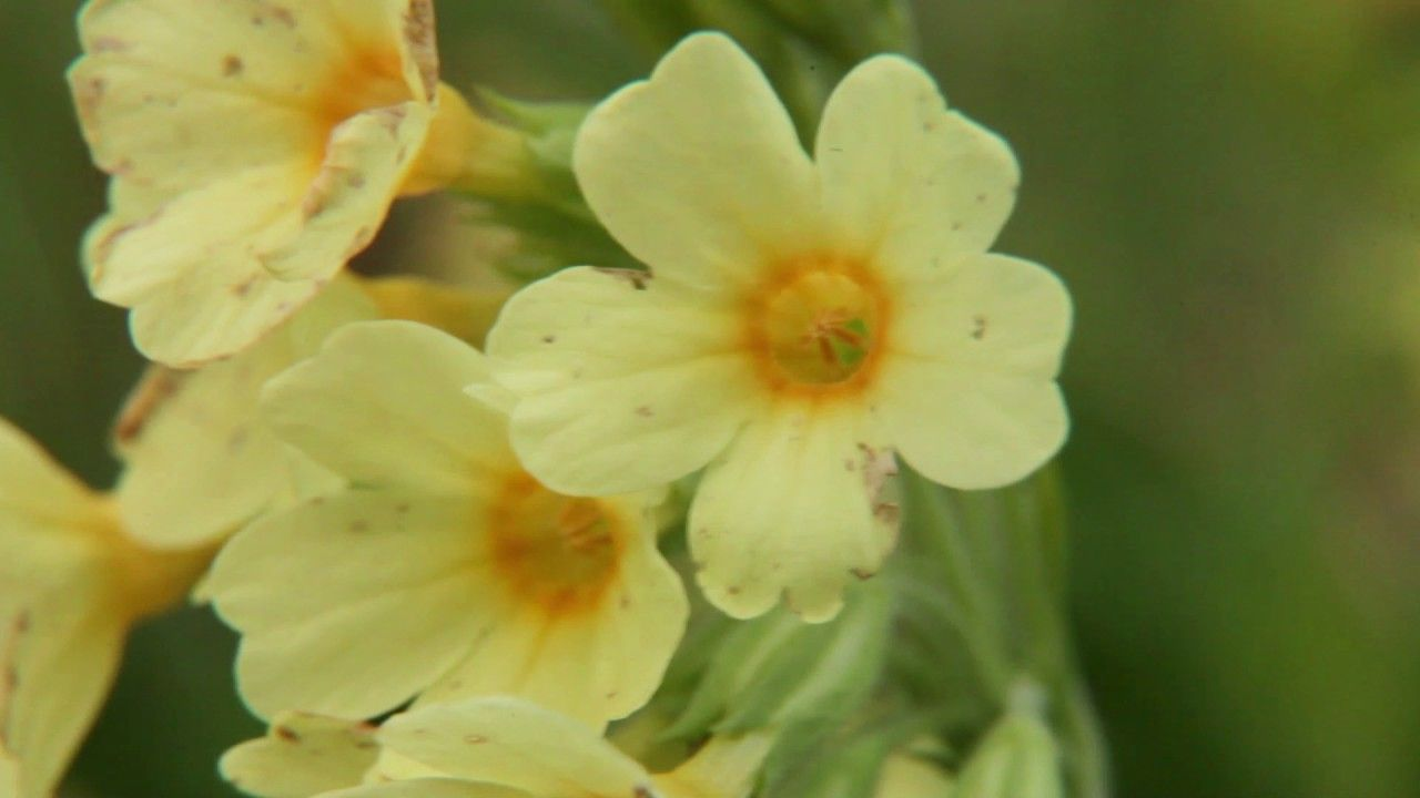 Vroege Vogels - Vroege voorjaarsbloemen