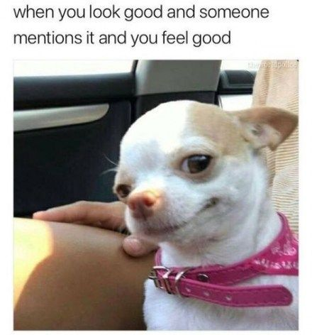 56 Trendy Funny Relatable Memes Clean Funny Memes Funny Dog Memes Funny Dog Faces Animal Memes