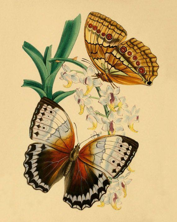 Butterfly Vintage art print Antique prints Wall art ...