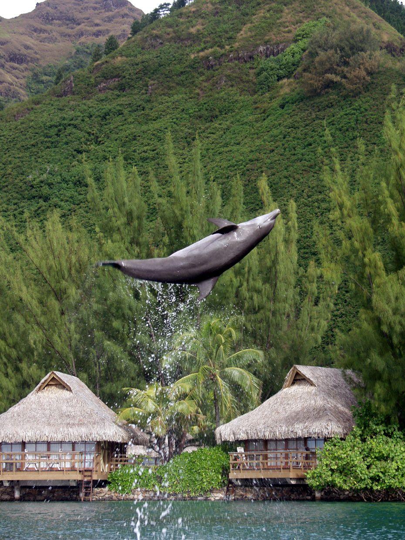 Dolphin Center Intercontinental Resort Spa Moorea Polynesie