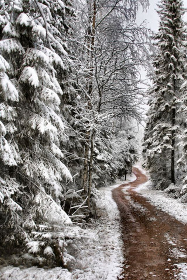 Pine Tree Snow Iphone Wallpaper Hd Iphone 5 Wallpapers Landscape Trees Pine Tree Art Tree Photography
