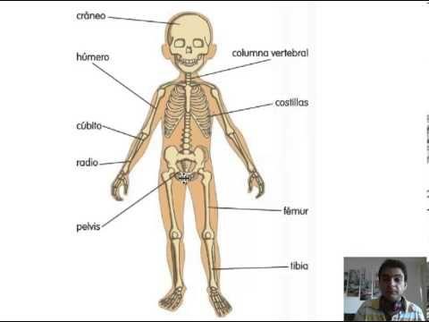 Youtube Huesos Del Cuerpo Cuerpo Humano Huesos Del Cuerpo Humano