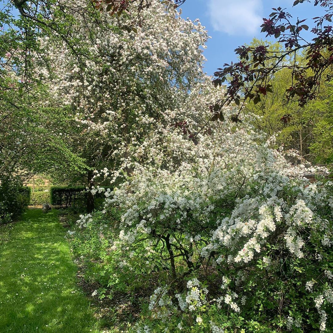 Spring Power Life Continues And Dies And Renews In 2020 Plants Garden Spring
