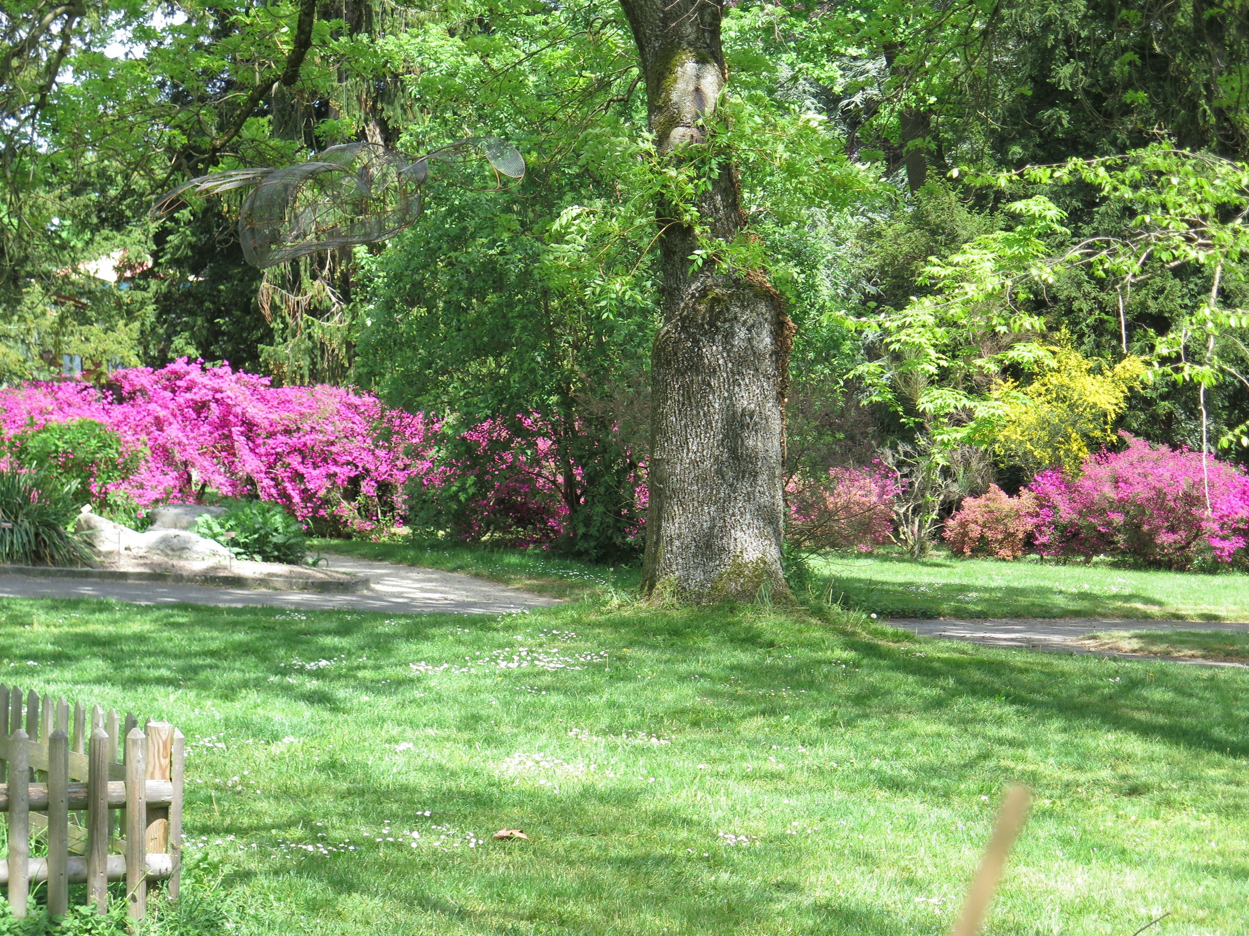 Jardin botanique de Genève   Jardin botanique, Botanique, Jardins