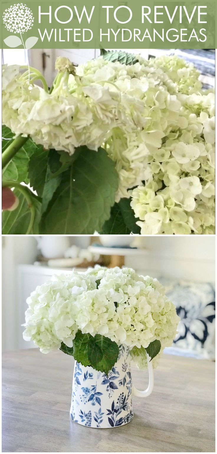 Flower hack easy tip on how to revive wilted hydrangeas